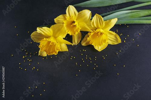 Three yellow narcissus on dark background.