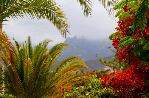 Foto op Aluminium Canarische Eilanden Exotic tropical flora in Torviscas Alto,Tenerife,Canary Islands,Spain. Blooming Flamboyant and palm trees in the garden.Travel or vacation concept.