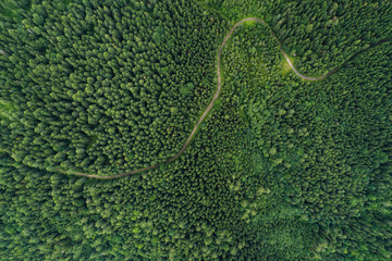 Obraz na PlexiAerial view of a road in a deep forest
