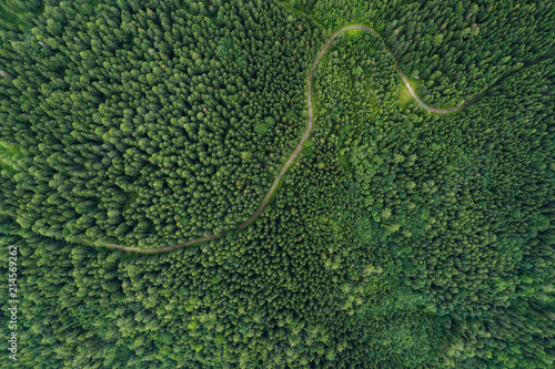 In de dag Luchtfoto Aerial view of a road in a deep forest