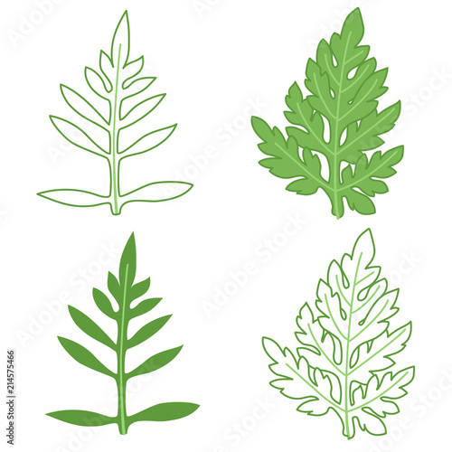 Photographie Ragweed leaves illustration set, colored and outline