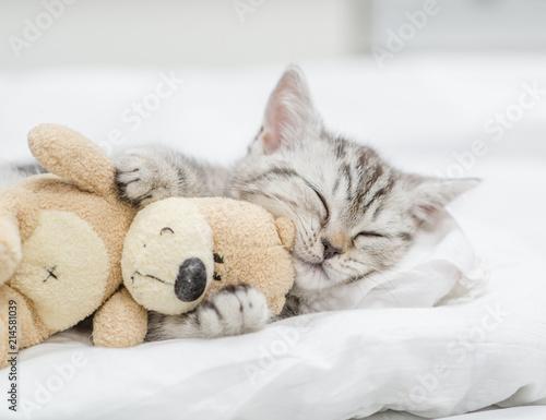 Fototapeta Close up baby kitten sleeping with toy bear obraz
