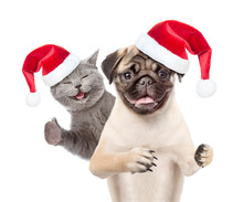 Pug Puppy In Red Santa Hat And...