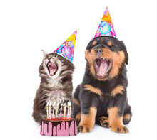 Kitten And Puppy In Birthday H...