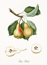 Pear, Also Known As Pearl Pear...