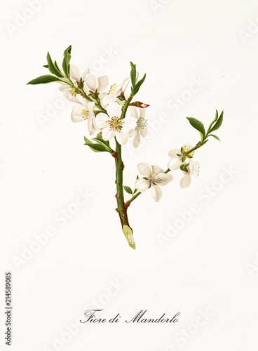 White almond tree flowers on a single branch Poster Mural XXL