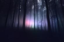 Strange Light In Paranormal Forest Landscape At Night