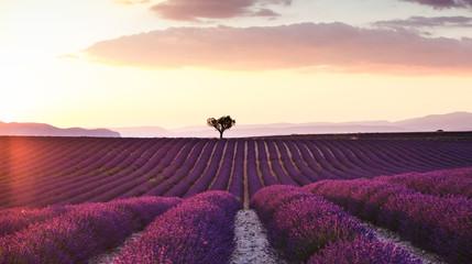 Piękny krajobraz lawendowi pola przy zmierzchem z dramatycznym niebem.
