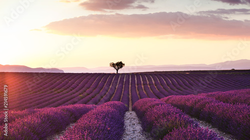 Fototapeta Beautiful landscape of lavender fields at sunset with dramatic sky.