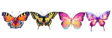 Beautiful Color Butterflies, S...