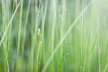 Grass In Backyard Close View S...