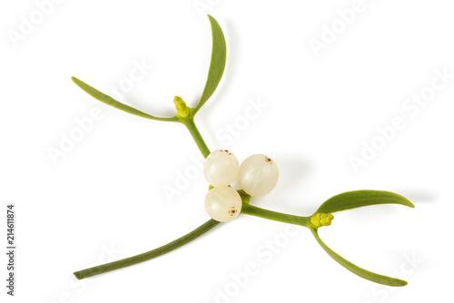 Photo mistletoe