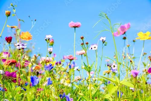 Photographie  Blumenwiese - Sommerblumen - Wildblumen
