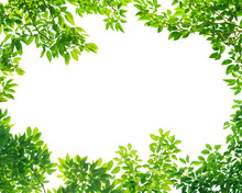 Frame Of Green Leaves On White Background With Center Space