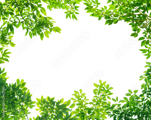 Frame of Green leaves on white background with center space Fotobehang