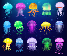 Jellyfish Vector Ocean Jelly-f...