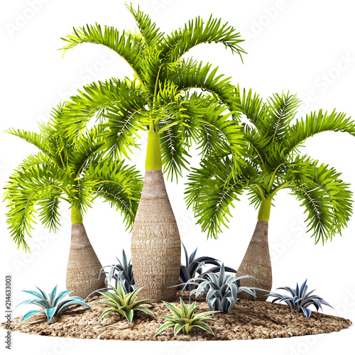 Hyophorbe palm Wall mural