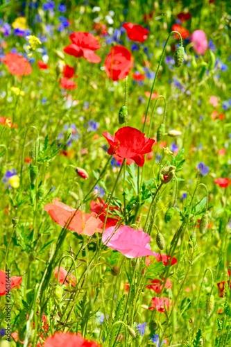 Blumenwiese - Sommerblumen - Grußkarte Mohnblumen