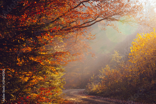 Papiers peints Forets nature autumn sunshine leaves yellow forest morning colorful sun rays branches trees air