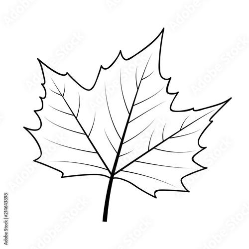 1159 ahornblatt kanada malvorlage  coloring and malvorlagan