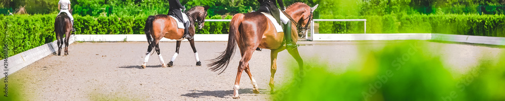 Fototapety, obrazy: Horse horizontal banner for website header design. Dressage horses and riders in uniforms during equestrian competition. Blur green trees as background.