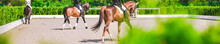 Horse Horizontal Banner For We...