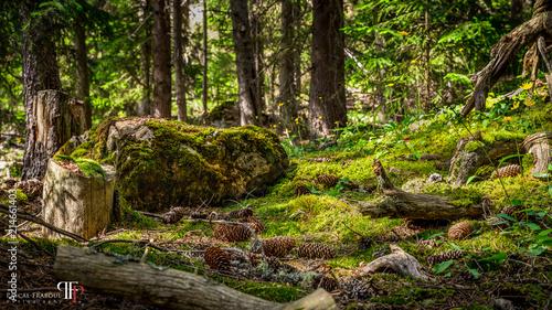 Foto auf Gartenposter Schwarz Sous-bois dans le Val d'Escreins, Queyras, Hautes-Alpes - Undergrowth in the Val d'Escreins, Queyras, High Alps