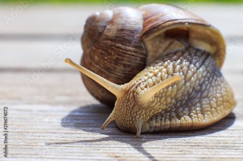 the snail crawls on a wooden background