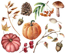 Watercolor Autumn Plants Set. ...