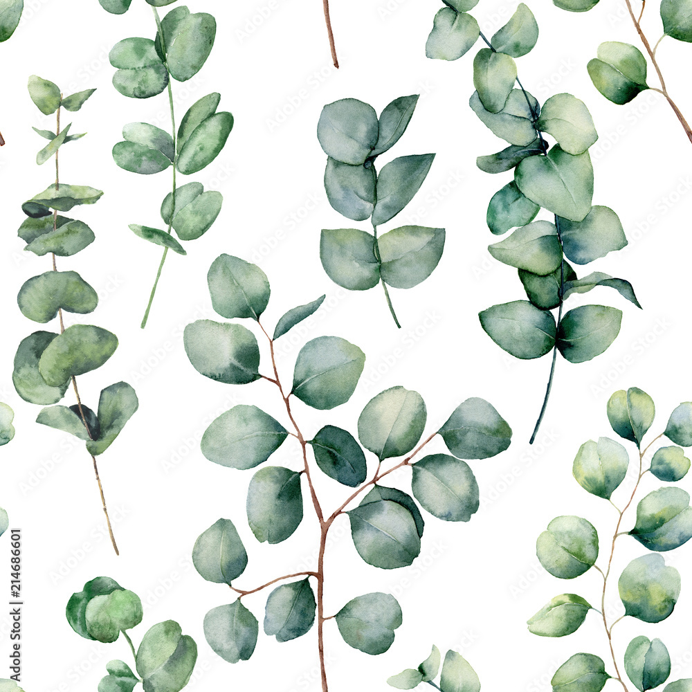 Watercolor pattern with eucalyptus round leaves. Hand painted baby and silver dollar eucalyptus branch isolated on white background. Floral illustration for design, print, fabric or background.