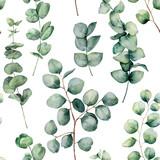 Akwarela wzór z okrągłych liści eukaliptusa. Ręcznie malowane dziecko i gałąź eukaliptusa srebrny Dolar na białym tle. Kwiatowa ilustracja do projektowania, drukowania, tkaniny lub tła. - 214686601