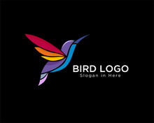 Modern Colorful Hummingbird Fly Logo