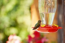Hummingbird Perched On Feeder With Blurred Background