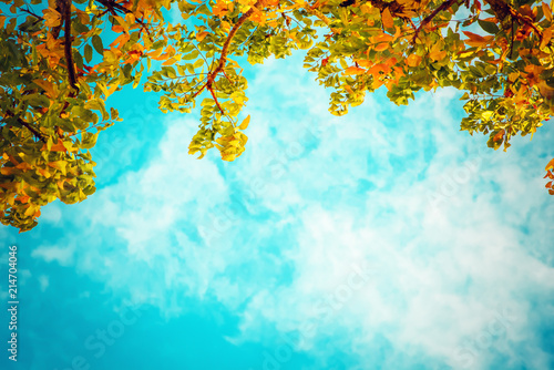 vintage photo of autumn tree with blue sky Canvas