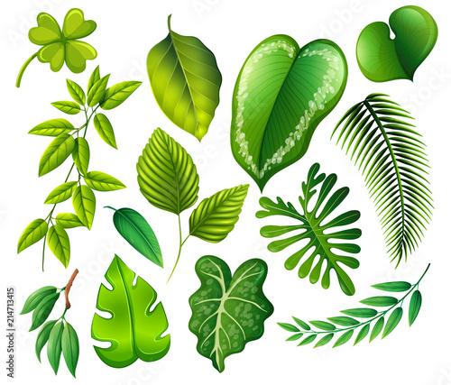 Spoed Foto op Canvas Planten A set of green leaf