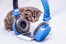 A Kitten Looks Curious On Mobile Phone And Headphones. Listen To Contemporary Popular Music_