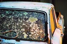 Vintage Car Windshield With Lichen