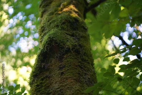 Naturbilder Download
