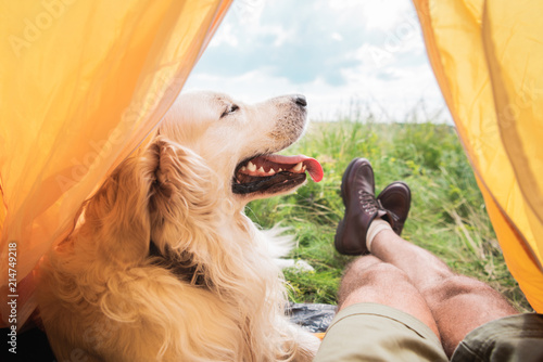 partial view of tourist in tent with golden retriever dog on meadow Fototapeta