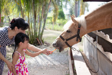 Asian Little Chinese Girl And Mother Feeding A Horse With Carrot