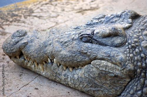 Foto op Plexiglas Krokodil SONY DSC