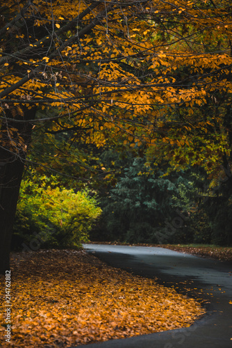 Foto op Canvas Herfst Autumn landscape of yellow leaves park and road