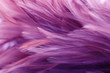 canvas print picture - Close up of purple feathers