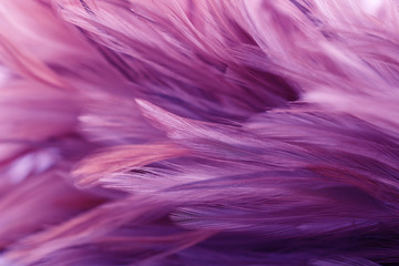 Close up of purple feathers