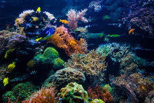 Colorful Coral Reef With Fish ...