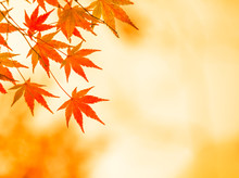 Autumnal Background, Slightly ...