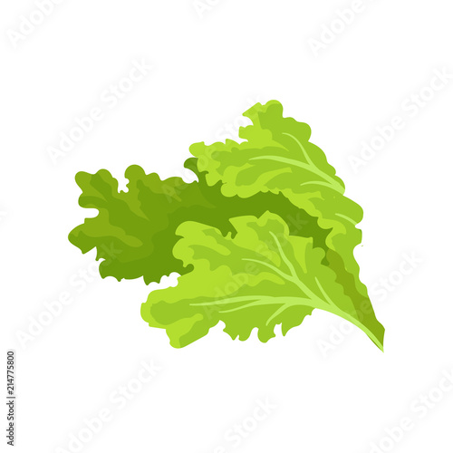 Obraz Bright green lettuce leaves. Fresh and healthy vegetable. Vegetarian nutrition. Flat vector for advertising poster of grocery store - fototapety do salonu