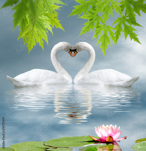 Lotus Flower And Two Swans As A Symbol Of Love Buy This Stock