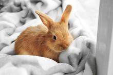 Cute Fluffy Bunny On Windowsil...