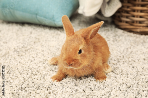 Photographie Cute fluffy bunny on floor at home